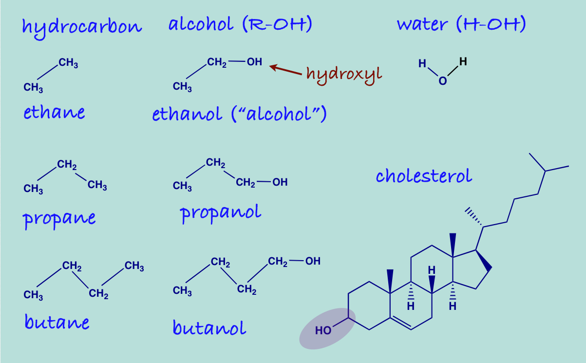 organic compounds Organic compounds are complex compounds of carbon found in every living thing, organic compounds include things like protein.
