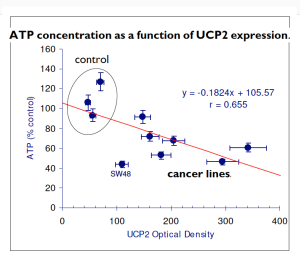 constant_ATP_UCP2